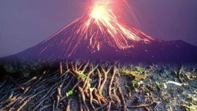 Kemunculan Cacing dan Gempa Bumi