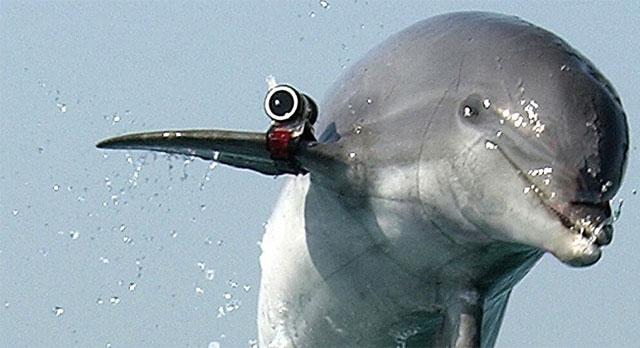 Lumba lumba mata mata