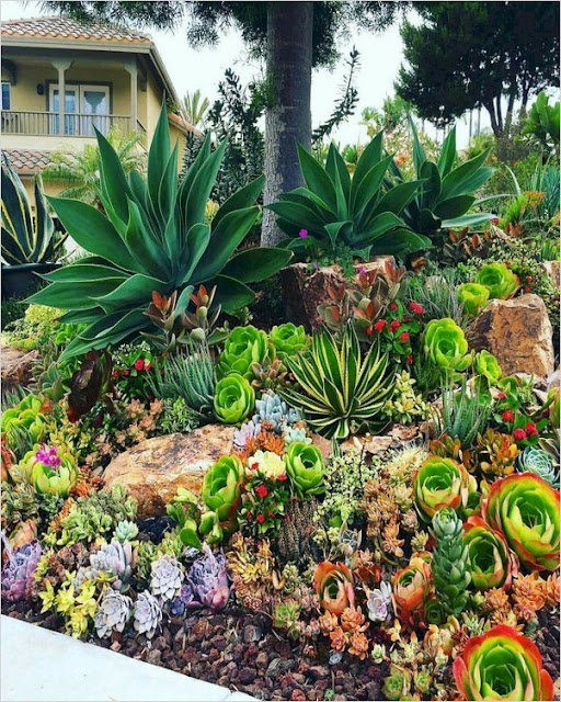 best succulent rock garden plants ideas