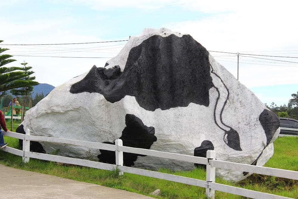 Batu asas Desa Dairy Farm?