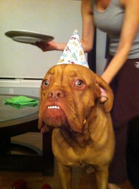 Chết cười với 17 chú chó thấu hiểu sâu sắc nỗi lòng chủ nhân