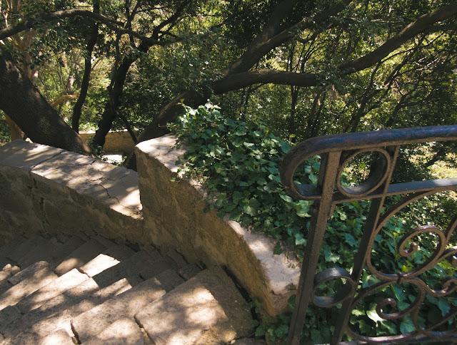крым никитский ботанический сад 2016
