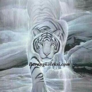 khasiat ajian macan putih, khodam macan putih keturunan, khodam macan putih menurut islam, ilmu macan putih menurut islam, khodam macan putih gratis, cara mengisi khodam macan putih ke tubuh, doa mengisi khodam macan putih, cara memanggil harimau putih gaib, jurus macan putih, mustika macan putih, mustika khodam macan putih, khodam macan, mantra macan putih, macan putih prabu siliwangi,