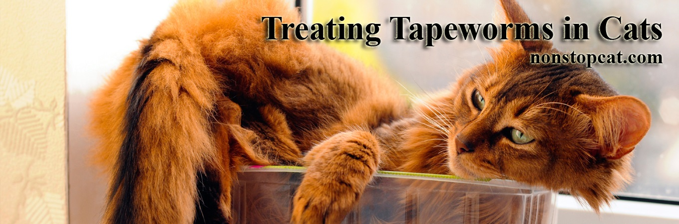 Treating Tapeworms in Cats