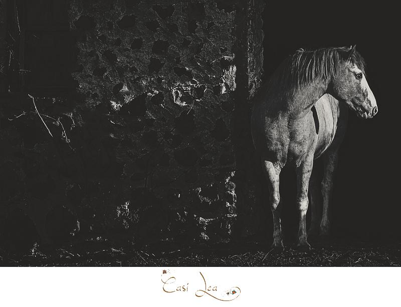 Equine photography by Casi Lark © 2016 Casi Lea Photography