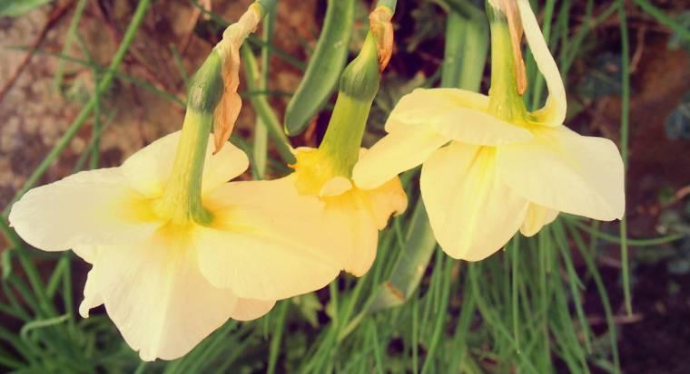 Queen's Park Chesterfield: How Does Your Garden Grow?