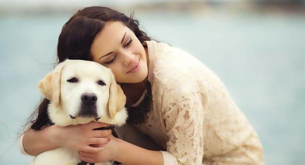 Los Perros: Amigos, compañeros, amor incondicional