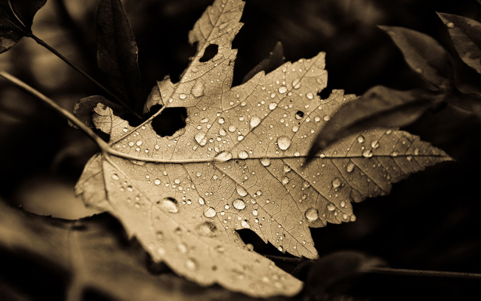 Wallpapers dry leaf wallpapers for Images of the best