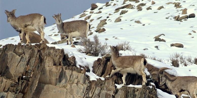 Hemis National Park  Trip My India