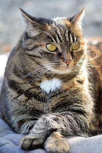 Nunca brinque de laser com o seu gato