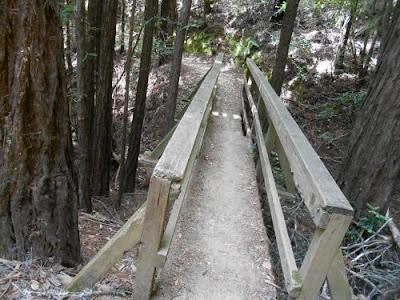 bridge, muir woods, redwoods, redwood trees,