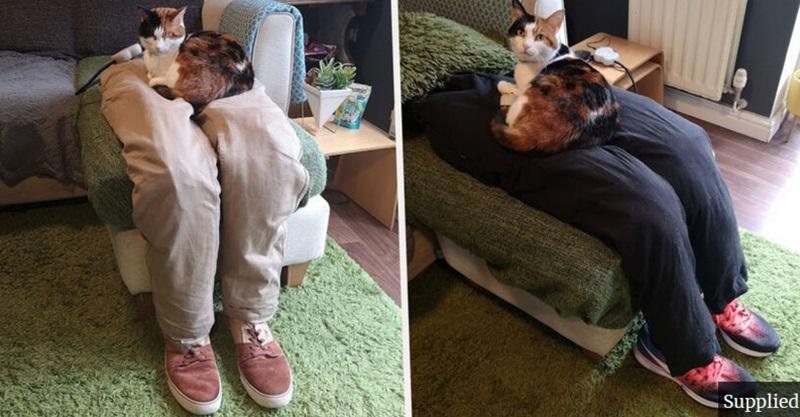 Pra conseguirem sair de casa, casal faz pernas falsas pra gata sentar e deixar eles em paz