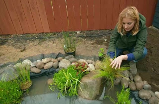 Katie adds plants to the pond