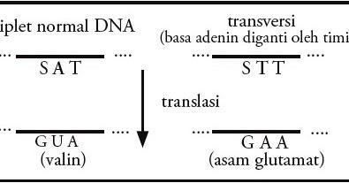 Pengertian dan Contoh Transversi DNA (Genetik), Penyebab