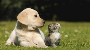 estimular mente perros