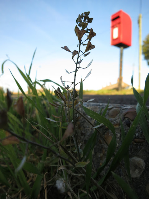 A red post box on a pole with a plant in the foreground showing its seeds