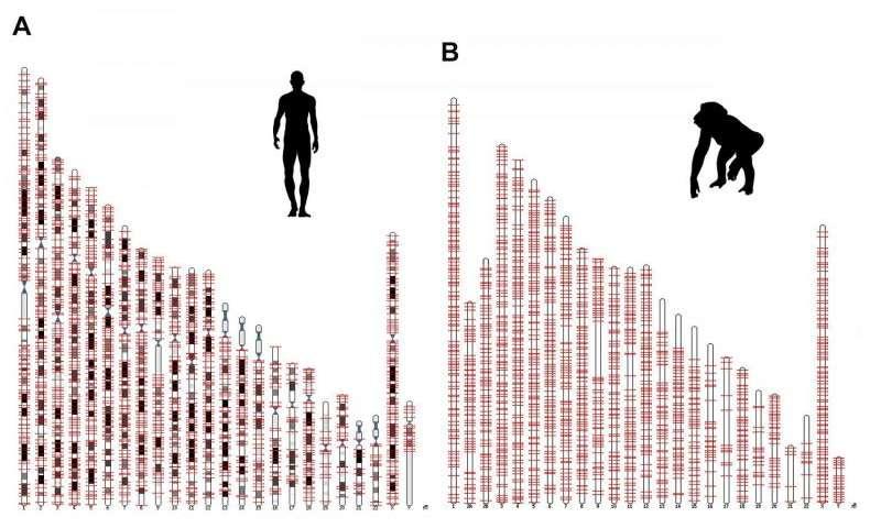 دراسة تبحث تاثير العوامل البروتينية في جينات القفز البشرية