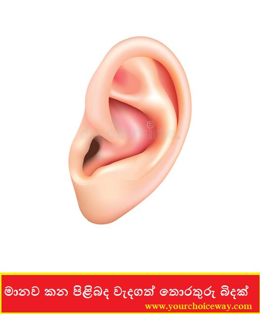 මානව කන පිළිබද වැදගත් තොරතුරු බිදක් 😁✍️👇 (Kana [ Ear ]) - Your Choice Way