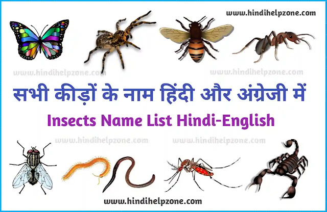 All Insects Name List in Hindi and English - कीड़ों के नाम