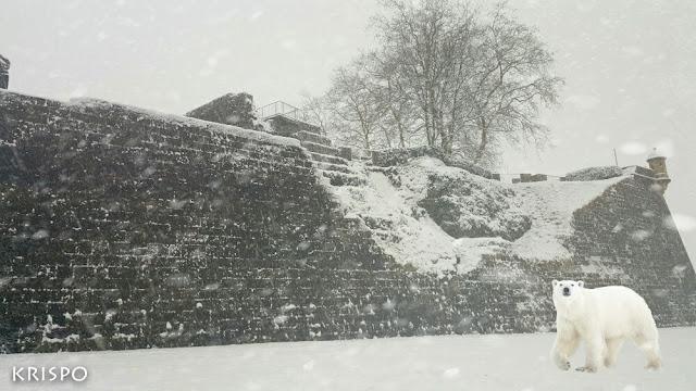 muralla de Hondarribia con nieve en pleno temporal y con la visita de un oso polar