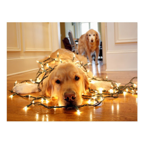 Holiday Helper Golden Retriever Tangled Up | Cute Postcard