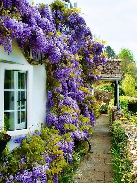 Dream gardens tradi n provens lsk zahrada - Balkon arbor ...