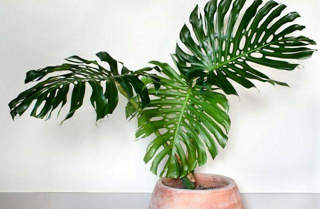 Indoor Ornamental Plants