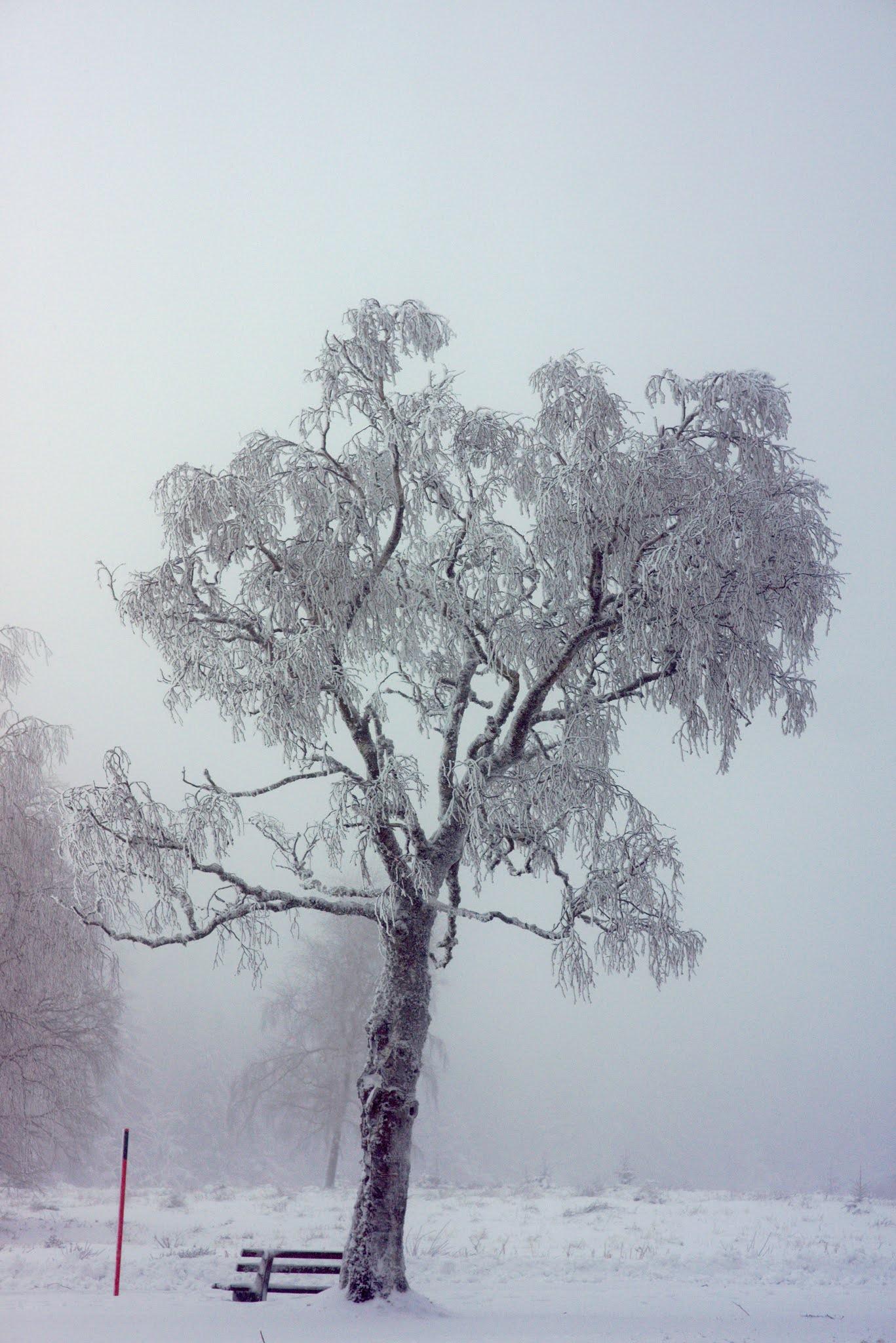 Bäume (4)