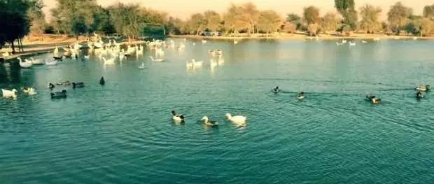 بحيرة الورسان