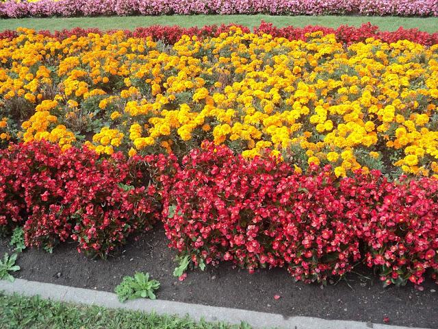 flores amarelas e vermelhas