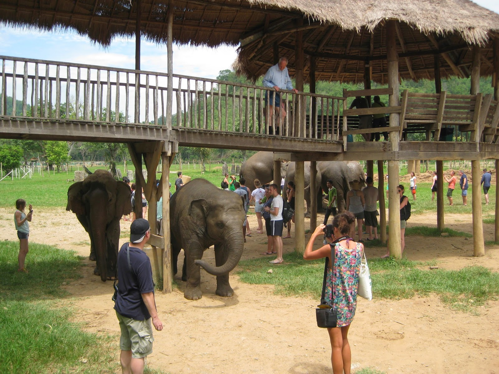Chiang Mai - We were free to mix with the elephants after they ate