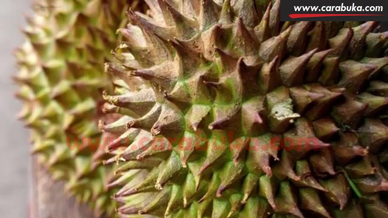 Tips Cara Memilih Durian Matang dan Manis 9