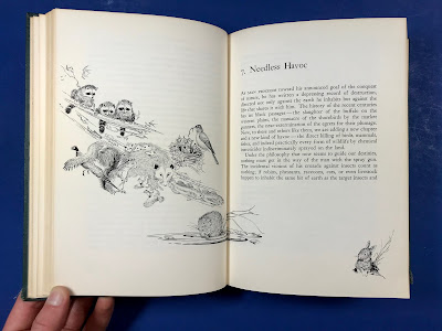 "Photograph of the opening chapter page from chapter seven titled ""Needless Havoc"". The illustration depicts a group of woodland animals to emphasize the chapter's focus on chemical accumulation in natural food webs."