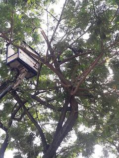 tebang pohon menggunakan crane surabaya