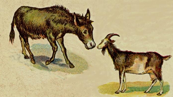 L'asino e la capra - Esopo