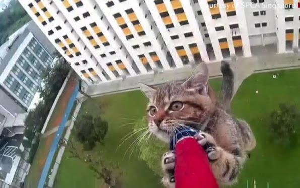 Cat falls off high rise