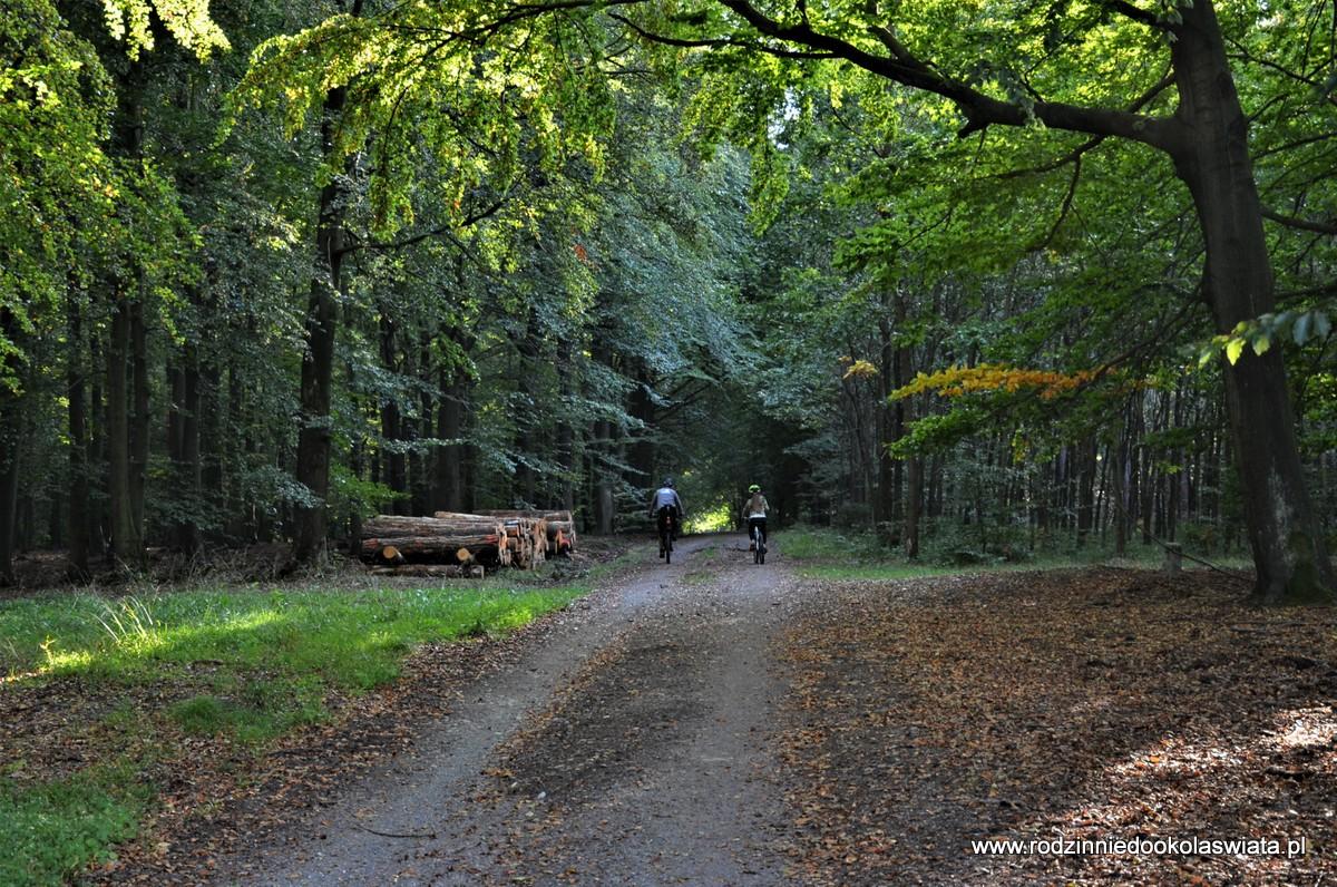 Z Rudna nad Zalew Chechło, czyli przez Puszczę Dulowską rowerem