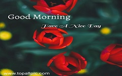 Good Morning Tuesday Images, Photo, Wallpaper