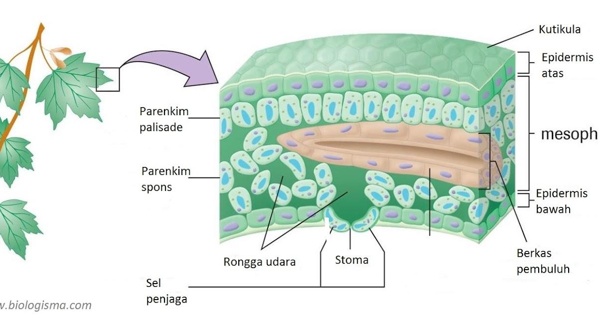 Materi Evolusi Biologi