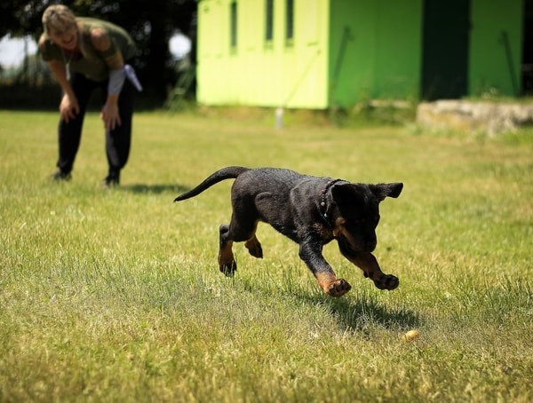Know That the Dog Training Industry is Unregulated