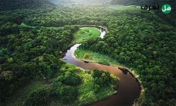 معلومات عن غابة الامازون