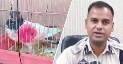 India police arrest pigeon on suspicion of being a Pakistan spy