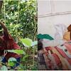 Pilu, Bocah 8 Tahun Ini Rela Jual Kayu Bakar Demi Bisa Makan dan Sembuhkan Nenek