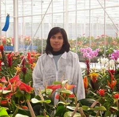 bisnis-rental-tanaman-hias