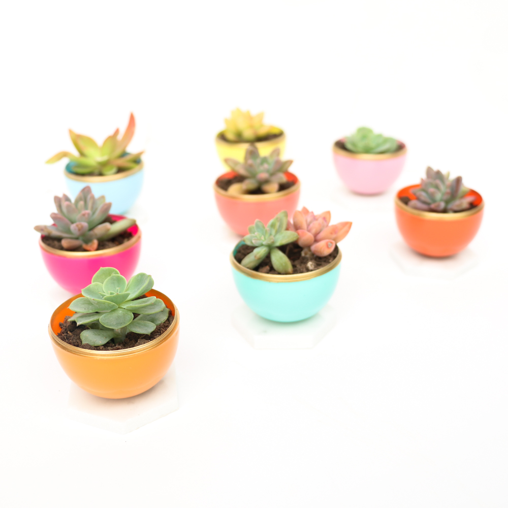 Craft It - DIY Mini Spring Succulent Planters - A Kailo Chic Life