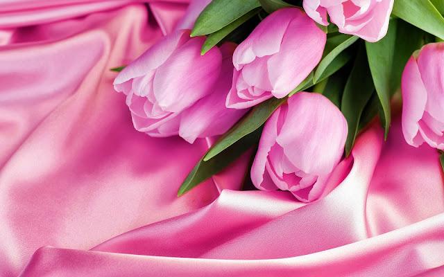 Roze tulpen op een roze zijden laken