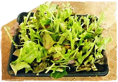 well used living lettuce