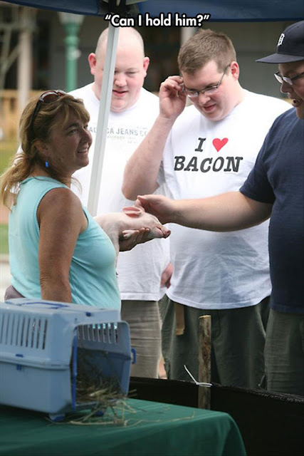 i love bacon shirt, i love bacon shirt with pig, baby pig, tshirt irony, bacon meme, bacon funny, farm funny