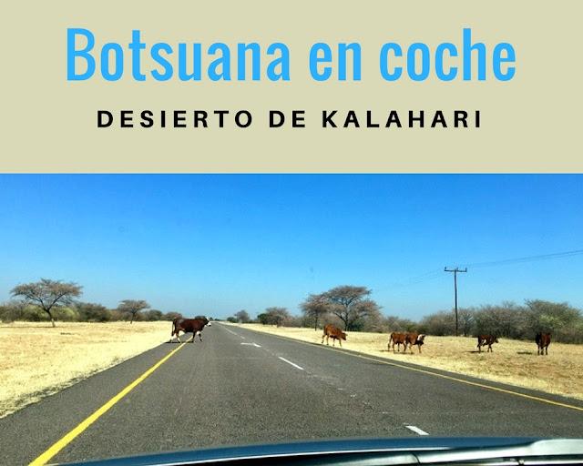 Botsuana en coche de alquiler