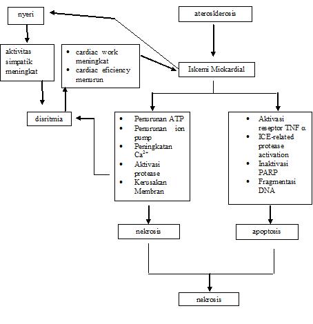 Patofisiologi Diagram Infark Miokard Akut AMI Acute Myocardial Infarction